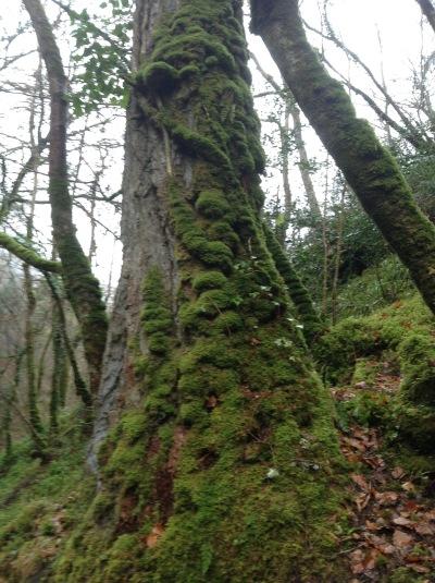Irish Tree Week