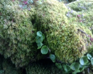 Fluffy Burren