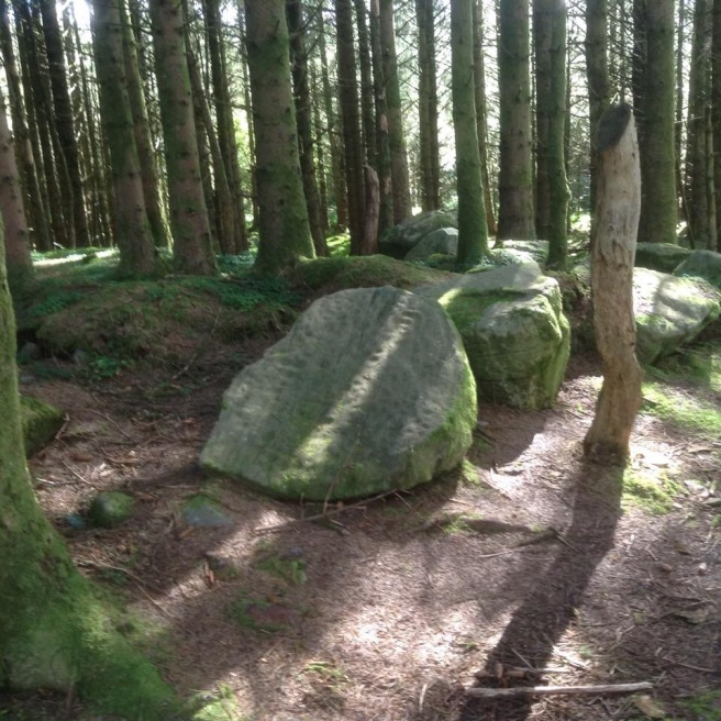 Wild Wood Cavan Burren dorest park