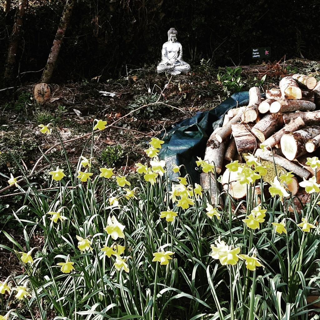Buddha Daffodils